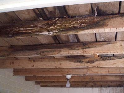 Wood Ceiling Beam Repair
