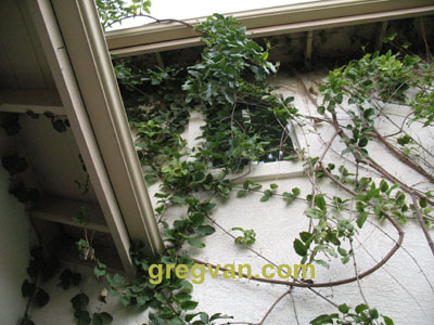 Plant Covering Window