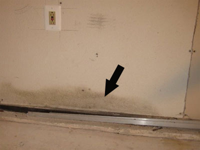 Mold On Lower Wall Area